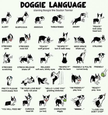 dog_body_language